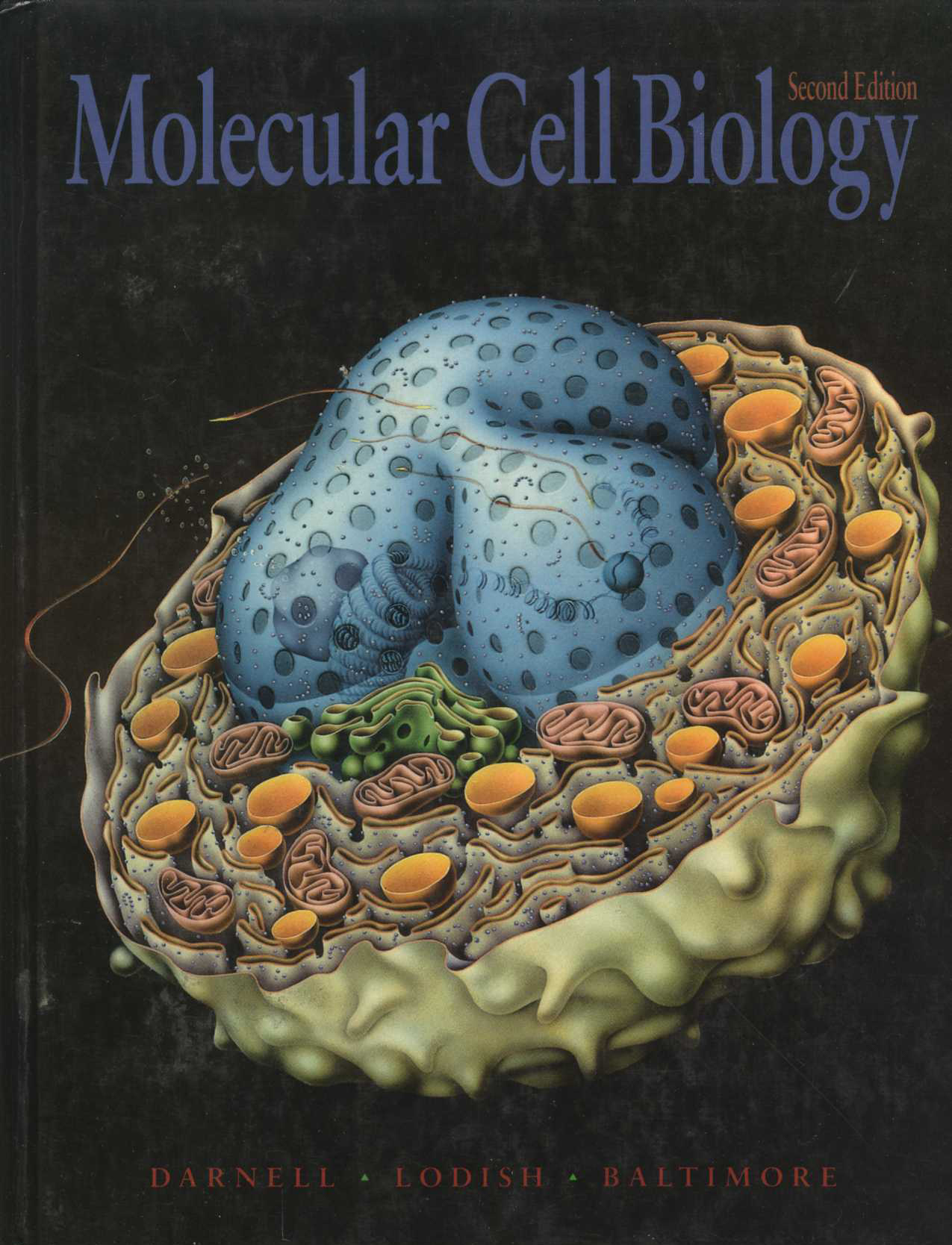 Molecular Cell Biology (Darnell, Lodish, Baltimore)